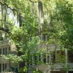 Savannah 2012 006