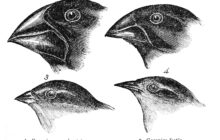 The Great (R)evolution: Darwin's On the Origin of Species